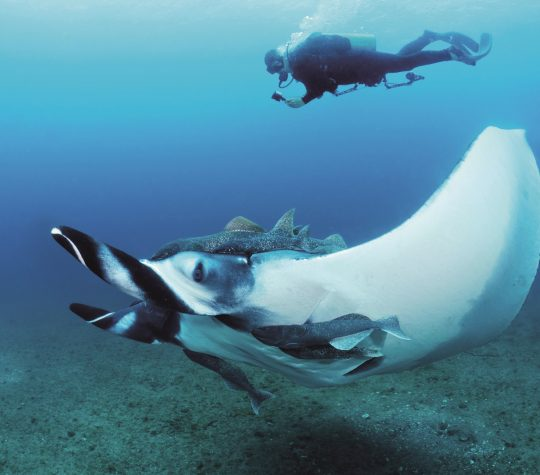 2. Andrea with giant manta - Jose Alejandro Alvarez